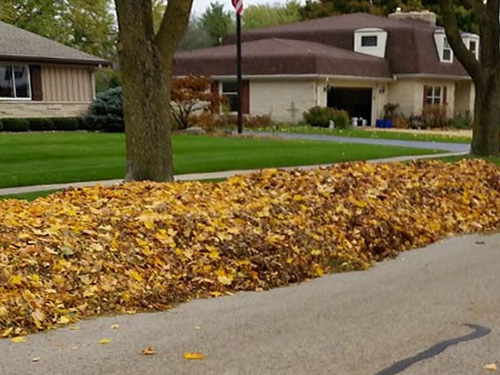 after leaf cleanup