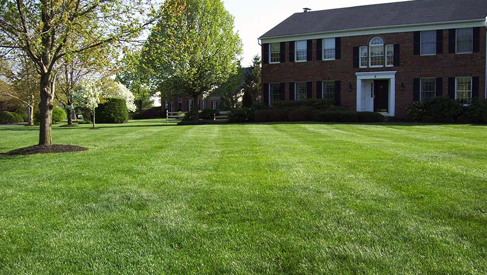 weekly lawn care