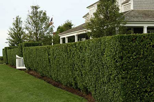 bush shrub pruning
